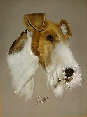 """Sale - Wire Haired Fox Terrier By Brian Hupfield Dog Print 12 X 16"""" - Reduced"""