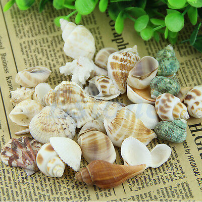Approx 100g Beach Mixed SeaShells Mix Sea Shells Shell Craft SeaShells Aquarium