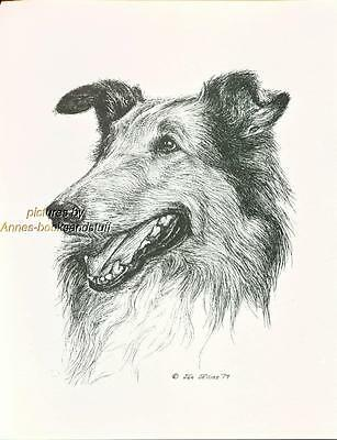 #24 SABLE COLLIE portrait *  dog art *  Pen and ink drawing * Jan Jellins