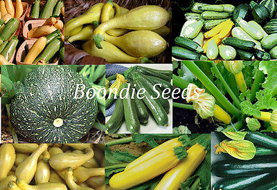 ZUCCHINI 'Heirloom Mix' 15 seeds mixed types yellow green grey NON GM zuchinni