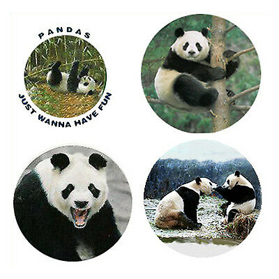 Panda Magnets: 4 Practically Perfect Pandas for your Collection-A Great Gift
