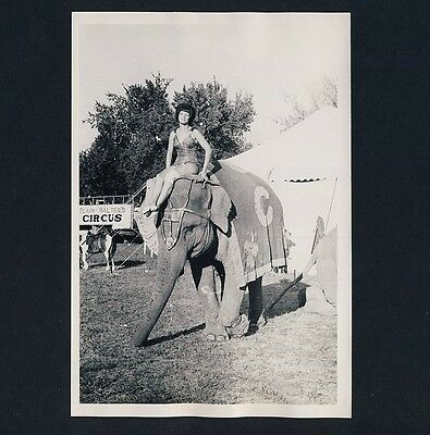 US CIRCUS CLARK & WALTERS Elephant Elefant * Vintage 1966s Archives' Photo #1