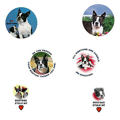 Boston Terrier Magnets:   6 Cool Bostons for your Collection-A Great Gift