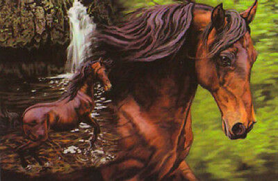 "LEANIN TREE ""Stillness In Motion""~Horse Fridge Magnet #67104~Artist Kim McElroy"