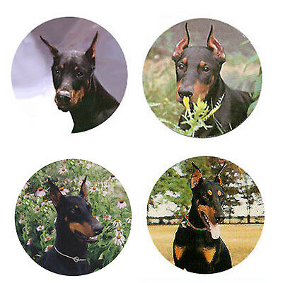 Doberman Pinscher Magnets:4 Cool Dobies 4 your Fridge or Collection-A Great Gift