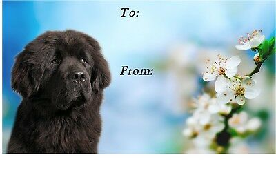 Newfoundland Dog Self Adhesive Gift Labels design No. 2. by Starprint