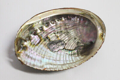 AQ Smudging - 12-14cm LARGE Abalone Shell Bowl + FREE SMUDGE STICK, PRAYER CARD