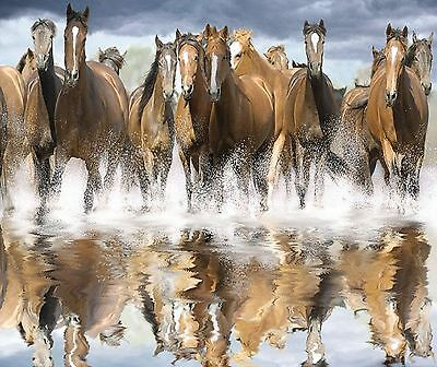 Horses Wild And Running Free Reflections 1 Image   Computer Mouse Pad 9 X 7