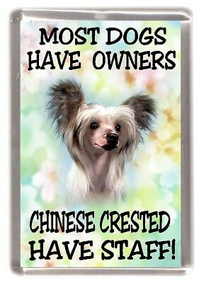 """Chinese Crested Dog Fridge Magnet """".....Chinese Crested Have Staff!"""" - Starprint"""