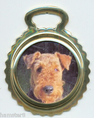 AIREDALE TERRIER  Photo - Ceramic horse brass ***NEW***