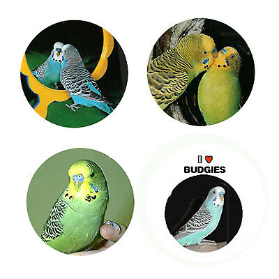 Budgie Magnets: 4 Sweet Budgies for your Fridge or Collection-A Great Gift