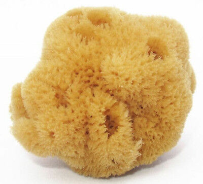 Children/Adult Bath Unbleached Brown Sea Sponge 100% Natural 4''- 4.5''