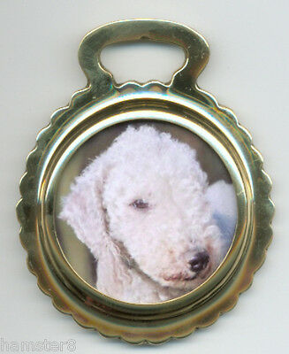 BEDLINGTON TERRIER #1  Photo - Ceramic horse brass ***NEW***