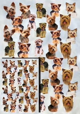 Yorkshire Terrier Dog Gift Wrapping Paper By Starprint