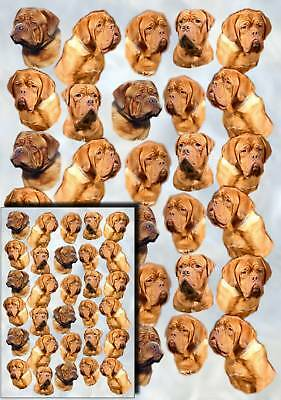 Dogue de Bordeaux Gift Wrapping Paper By Starprint