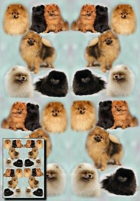 Pomeranian Gift Wrapping Paper By Starprint