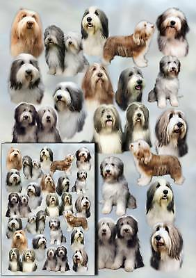 Bearded Collie Dog Gift Wrapping Paper By Starprint