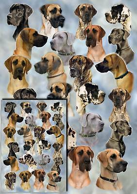 Great Dane Dog Gift Wrapping Paper By Starprint