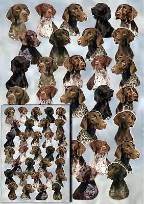 German Shorthaired Pointer Wrapping Paper By Starprint