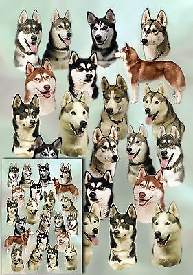 Siberian Husky Dog Gift Wrapping Paper By Starprint  - Auto combined postage