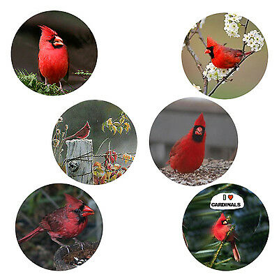Cardinal Magnets: 6 Cardinals for your Fridge or Collection
