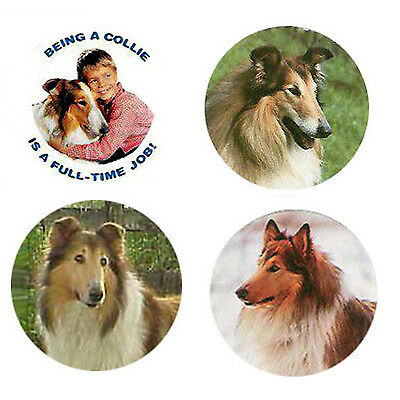 Collie  Magnets: 4 Way-Cool Collies for your Fridge or Collection-A Great Gift