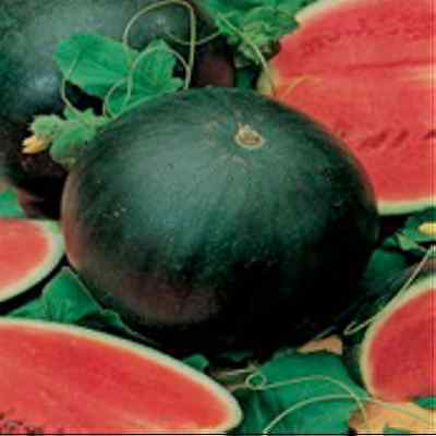 WATERMELON 'Sugar Baby' sweet fast maturing 10+ seeds HEIRLOOM vegetable garden