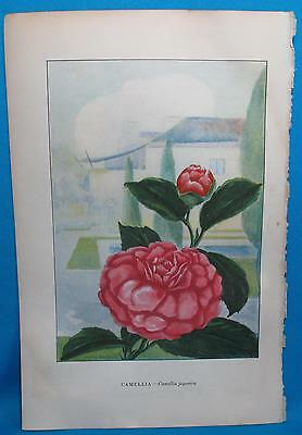 Vintage Camellia Smilax Vine Print Garden Flowers McCurdy Nature Library 1926