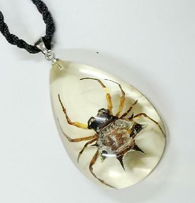 Ice Insect Necklace Real Spiny Spider (Gasteracantha kuhlii) Specimen :Clear