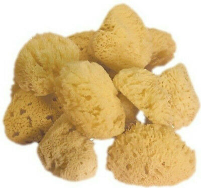 10 Natural Sea Sponges for Artists Crafts Painting pottery stippling