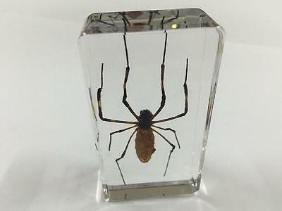 Spider Insect Paperweight Specimen Taxidermy Paperweight Collection