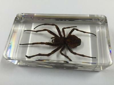 Insect Square Ghost Spider LUCITE NECKLACE TAXIDERMY PAPERWEIGHT