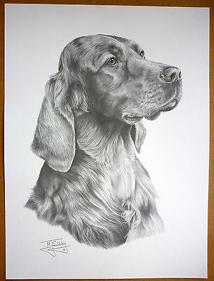 "Reduced Second - Irish / Red Setter By Mike Sibley - Dog Print 12 X 16"" - Sale"