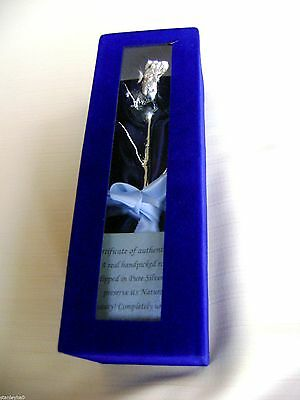 "CHRISTMAS SPECIAL GIFT Silver Dipped Real Rose 6""in Blue Satin & Velvet Box NEW"