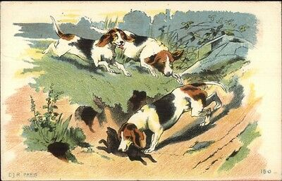 Hound Dogs Hunting Dogs Catching Rabbit c1910 French Postcard