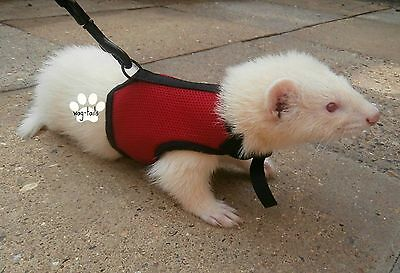 Ferret Rat Harness And Lead Set Vest Walk Training Ferret