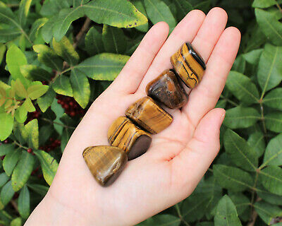 5 Gold Tiger Eye Tumbled Stones (Crystal Healing Chakra Reiki Gemstone) Bulk Lot