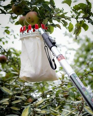 Darlac fruit picker basket & pole telescopic 2.4m apples pears plums picking