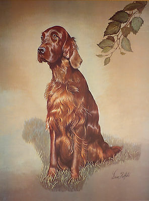 "Sale - Irish / Red Setter By Brian Hupfield Dog Print 12 X 16"" - Reduced"