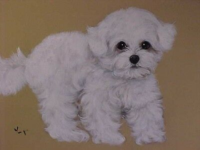 Bichon Frise Puppy Original Painting