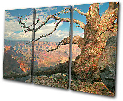 Landscapes Grand Canyon Tree  TREBLE CANVAS WALL ART Picture Print VA