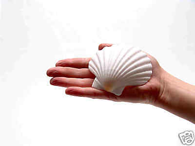 4 ENGLISH SCALLOP SHELLS Seashells