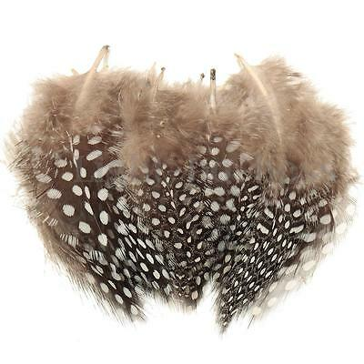 50PCS 5-10cm Spotted Guinee Pheasant Feathers For Craft/Millinery/Jewelery