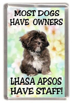 "Lhasa Apso Dog Fridge Magnet (2) ""Most Dogs Have Owners Lhasa Apsos Have Staff"""