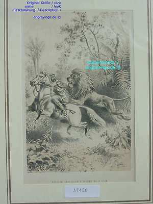 37450-Afrika-Africa-LÖWE-LION-Livingstone-Lithographie-Lithography-1885