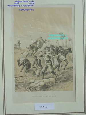 37452-Afrika-Africa-BEES-BIENEN-Livingstone-Lithographie-Lithography-1885