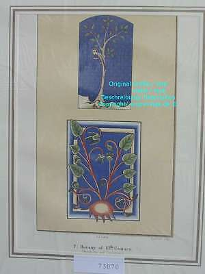 73070-Ruskin-Modern Painters-Malerei-Botany 13th centur-Lithographie-Lithography