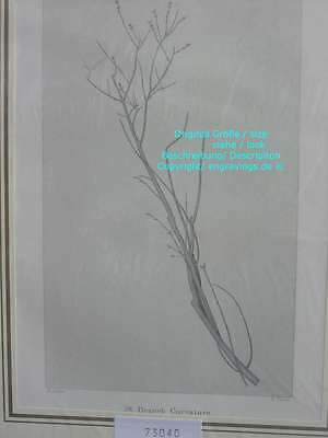 73040-Ruskin-Modern Painters-Malerei-Branch Curvature-Stahlstich-Steel engraving
