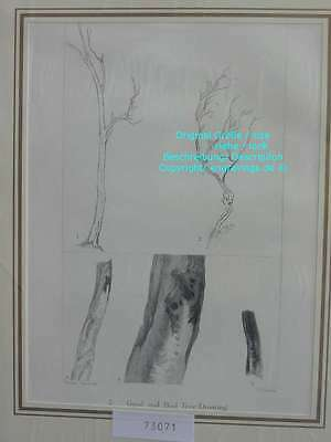 73071-Ruskin-Modern Painters-Malerei-Turner-Tree Draw-Stahlstich-Steel engraving