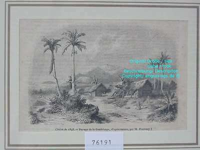 76191-Ozeanien-Guadeloupe-T Holzstich-Wood engraving
